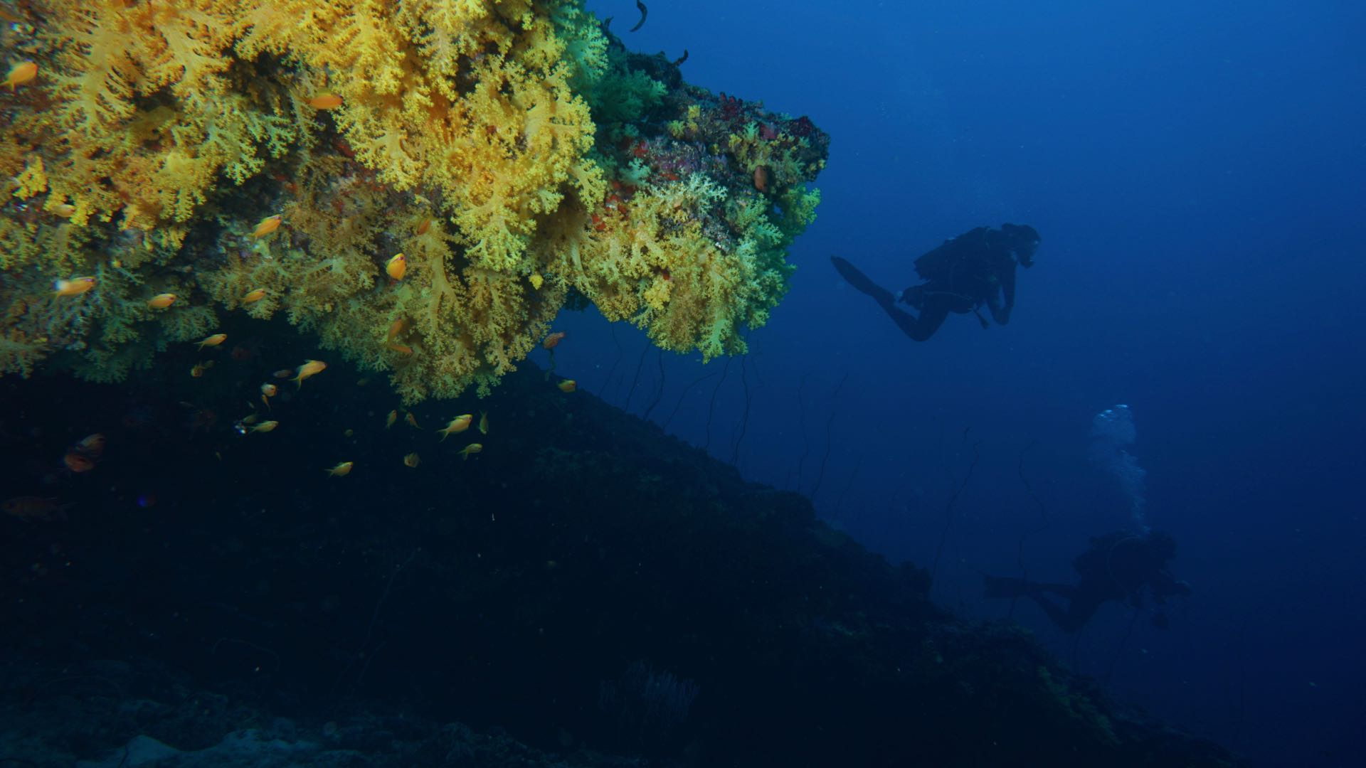 Yellow Softcoral Cave Maldives Divemood