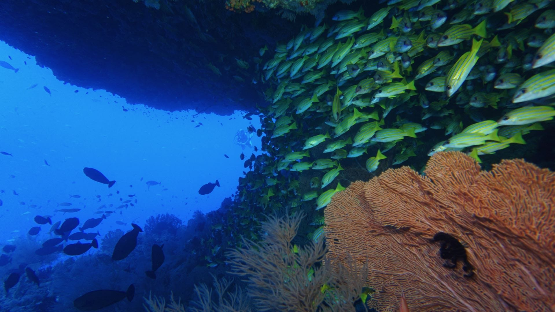Divemood Ari Queen Liveaboard Cave With Snappers